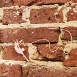 An ode to your wall – Fraaiheid